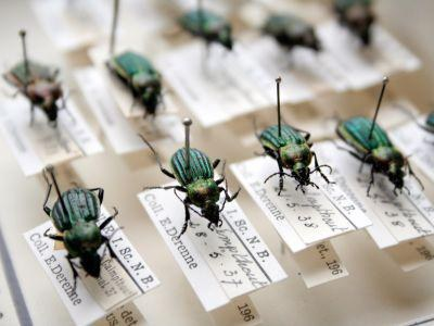 COLL_LOW_ENTOMO_BEETLES_DERENNE_01_EN.jpg