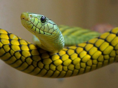800px-Snakes_green_reptile.jpg