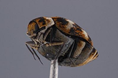 Unidentified Flying Invertebrate