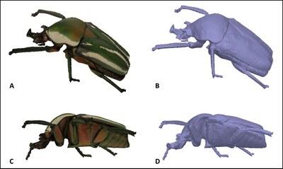 Brecko et al Figure 9.jpg