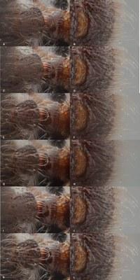 Brecko et al Figure 3.jpg