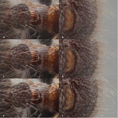 Brecko et al Figure 4.jpg
