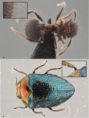Brecko et al Figure 8.jpg