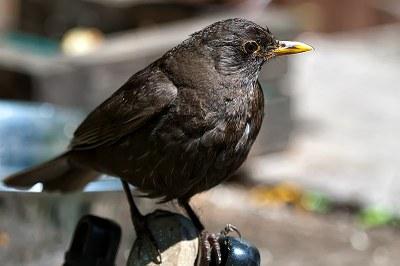 800px-Birds..Birds..Birds.._(5931131508).jpg
