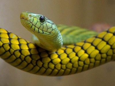 800px-Snakes_green_reptile.jpg