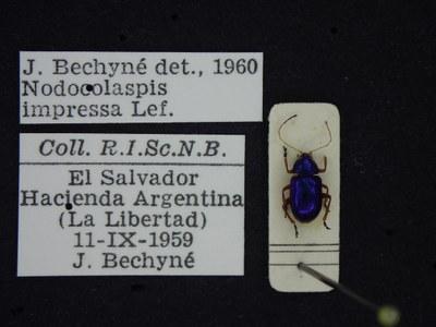 BE-RBINS-ENT Nodocolaspis impressa K30_D04_002 Label.JPG