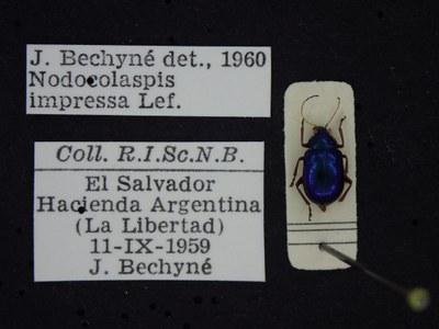 BE-RBINS-ENT Nodocolaspis impressa K30_D04_003 Label.JPG