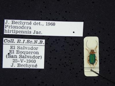 BE-RBINS-ENT Prionodera hirtipennis K30_D04_086 Label.JPG