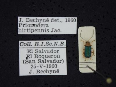 BE-RBINS-ENT Prionodera hirtipennis K30_D04_087 Label.JPG