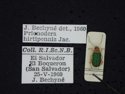BE-RBINS-ENT Prionodera hirtipennis K30_D04_090 Label.JPG