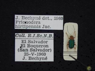 BE-RBINS-ENT Prionodera hirtipennis K30_D04_092 Label.JPG