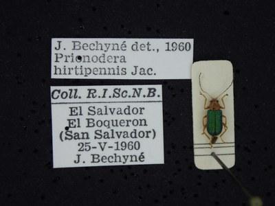 BE-RBINS-ENT Prionodera hirtipennis K30_D04_094 Label.JPG