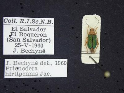 BE-RBINS-ENT Prionodera hirtipennis K30_D04_101 Label.JPG
