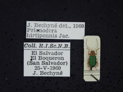 BE-RBINS-ENT Prionodera hirtipennis K30_D04_102 Label.JPG