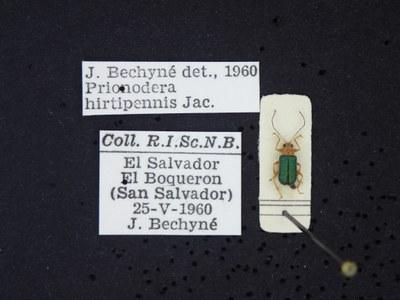BE-RBINS-ENT Prionodera hirtipennis K30_D04_104 Label.JPG