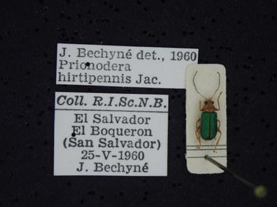 BE-RBINS-ENT Prionodera hirtipennis K30_D04_109 Label.JPG